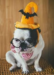3 Tips Selecting Pet Halloween Costumes