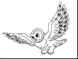 remarkable owl coloring page with owl coloring pages dokardokarz net