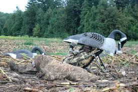 Layout Hunting Blinds Goose Season Dawns With Abundance Of Birds