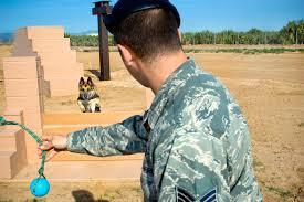 belgian shepherd us army u s department of defense u003e photos u003e photo essays u003e essay view