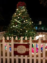 Zoo Lights Boston by Olga N Travel Journal Welcome To My Travel Journal Traveling Is
