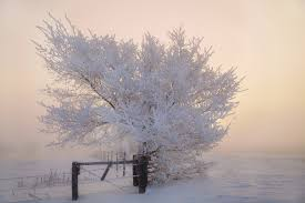 frosty trees background hd backgrounds pic