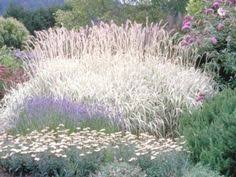 how to propagate ornamental grasses how to divide ornamental