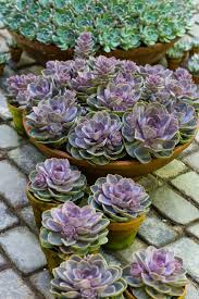 Low Light Succulents by 332 Best Succulents Images On Pinterest Types Of Succulents