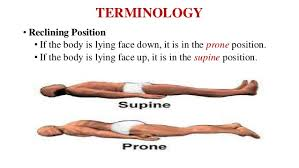 Human Anatomy And Physiology Terminology Introduction To Human Anatomy And Physiology
