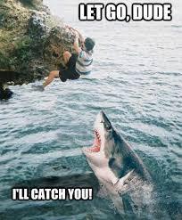 Funny Tiger Memes - the 21 funniest shark memes ever gallery worldwideinterweb