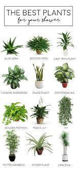 best plants for bedroom bathroom best bathroom plants ideas on pinterest in planner the