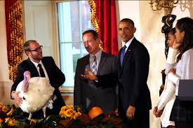 obama puts immigration spin on thanksgiving turkey pardon scripps
