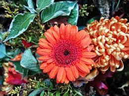 gerbera plant free photo gerbera flower plant free image on pixabay