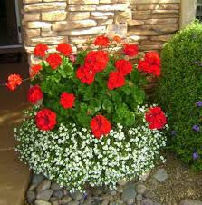 Container Flower Gardening Ideas Best Flowers For Containers Mforum