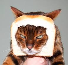 Cat In Bread Meme - cat breading this iz real humans iz weird