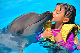 swim with dolphins for non swimmers and kids dolphinaris