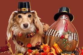 dogs dressed up as turkeys pilgrims pie etc unleashed