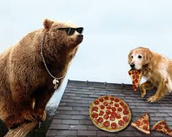 a bear wearing sunglasses watches a dog eat pizza on a roof