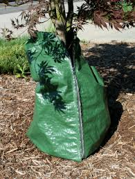 rx for landscapes water trees and shrubs not lawn