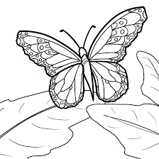 monarch butterfly coloring page itgod me