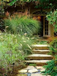 types of ornamental grasses hgtv