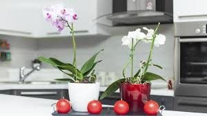 home decor red how decorating with red and purple can boost your prosperity