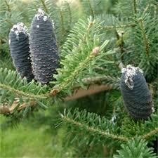 small garden trees ornamental trees