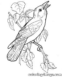 printable bird orioles coloring pages for kids colorpages7 com