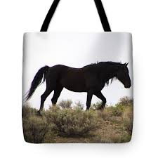 black mustang horse waterdancer black horses art for sale