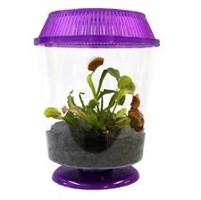 venus fly traps kits cool bug eating fly traps