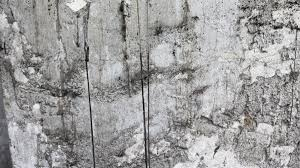 free images grungy white texture plank floor wall paint