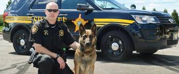 belgian malinois in ohio beloved ohio k 9 battling cancer joins clinical trial after being