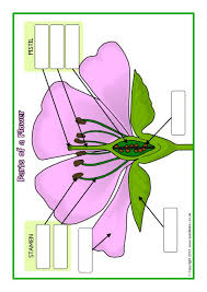 parts of a plant and flower posters worksheets sb1317 sparklebox