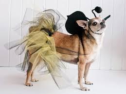 pet costumes diy dog and cat costumes hgtv