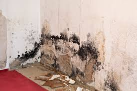 is mold inside a home bad for your health