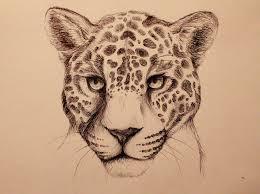 jaguar animal face drawing