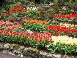 keukenhof flower gardens a visit to keukenhof in 40 pictures travel experience live