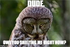 Owl Memes - seriously owl memes imgflip