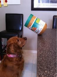 dog peanut butter dog peanut butter jar 1funny
