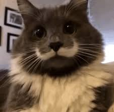 Mustache Cat Meme - celebrate caturday with movember cats cats vs cancer