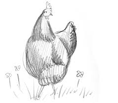 scratch and peck how to draw a chicken chickens pinterest