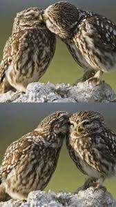 2567 best owls and more owls images on pinterest animals owl