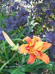 flower pairings our fairfield home u0026 garden