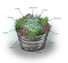 Plant Combination Ideas For Container Gardens Herbs Artichoke Container Garden Bonnie Plants
