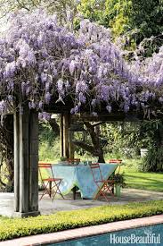 518 best just wisteria images on pinterest wisteria chinese