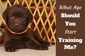 how to train dog to stop barking when to start training a puppy what age can you begin