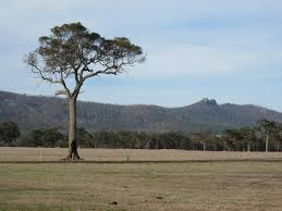 a lonely tree on a grassy plain photo