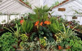 small trees in small gardens about the garden magazine gardening grow to eat tools gardens to visit shows