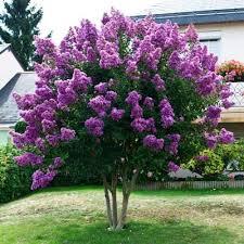 45 best trees images on garden trees flowering trees