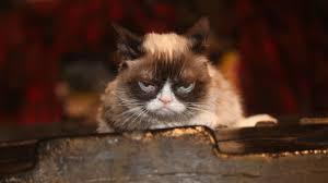 Frown Cat Meme - grumpy cat the a v club