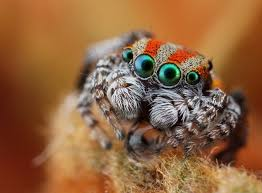 Image 325848 Misunderstood Spider Know - 84 best spiders images on pinterest jumping spider dragonfly