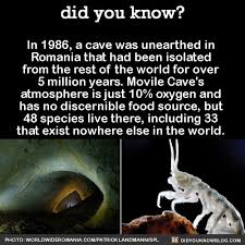 317 best images on facts random facts and