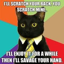 Business Cat Memes - the absolute best of the business cat meme business cat cat and