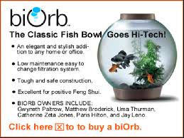 Goldfish In A Vase Fish Bowls Information About Keeping Fish In Glass And Plastic